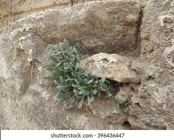 Plant growing through stone