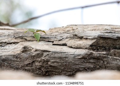 plant grows between a crack on a rock and tries to surrender