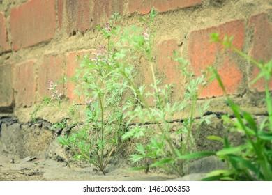 plant grows from concrete breaks through the asphalt
