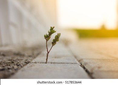 plant grows on floor and symbolizes struggle and restart