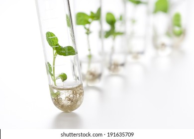 Plant grows in test tube