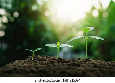 Plant growth on the soil - Shutterstock ID 1684215094