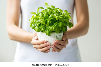 plant in the hands of a woman