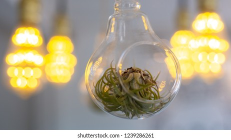plant in the hanging glass