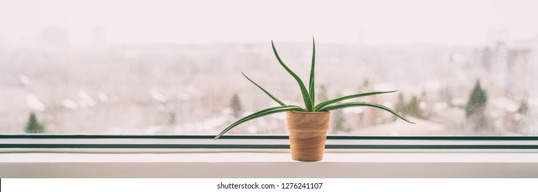 Plant at home window in winter - Air cleaning plant Aloe Vera to clean air from toxic chemicals - natural purifier indoors in condo building. Banner panorama.