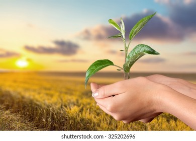 Plant in Human Hands.