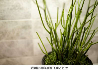 Plant Indoor with Horizontal Tiles Background