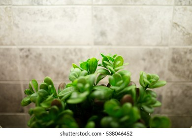 Plant Indoor with Tiles Background