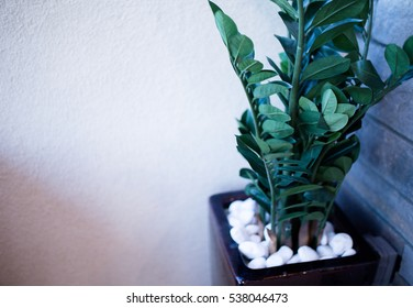 Plant Indoor with White Pebbles