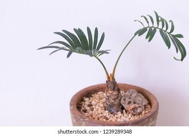 plant in jardiniere