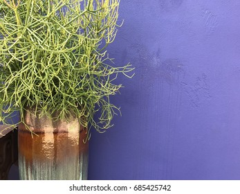 Plant with lavender background