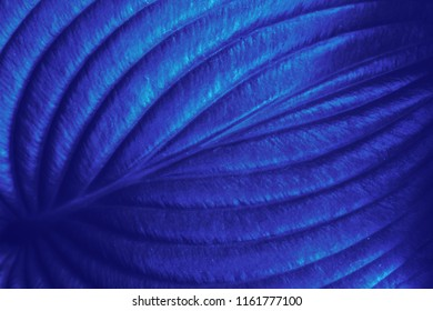 Plant leaf texture. Abstract blue nature background