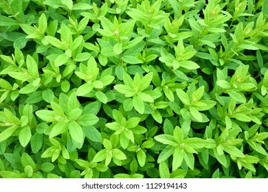 Plant leaves as a background