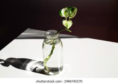 Pflanzenblätter in einer Wasserflasche auf weißem Hintergrund