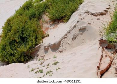 plant life on the beach