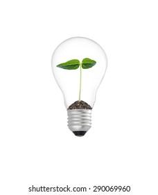 Plant in lightbulb on white background