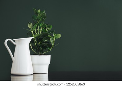 Plant in modern, minimal white flower pot against dark green empty wall with copy space.