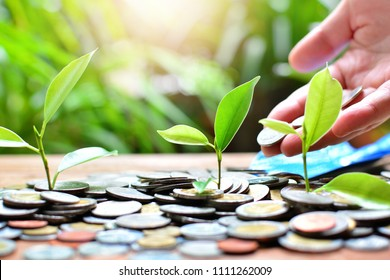 plant money coins saving growth up to profit for concept investment fund finance and pension