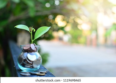 plant money coins saving growth up to profit interest for concept investment mutual fund finance and pension retirement