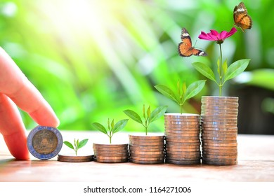 plant money coins saving growth up increase to high profit interest for concept investment mutual fund finance and pension retirement