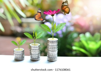 plant money coins saving growth up to profit interest for concept investment mutual fund finance and business