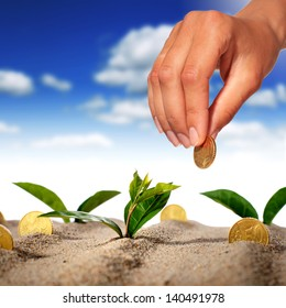 Plant and money in sand.