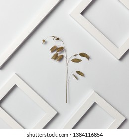 Plant natural decorative composition with empty frames for your text and eco leaf branch on a light gray background. Top view.