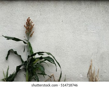 Plant near grey wall. abstract background.