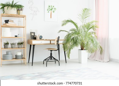 Plant next to desk and chair in bright workspace with wooden shelves and poster on white wall