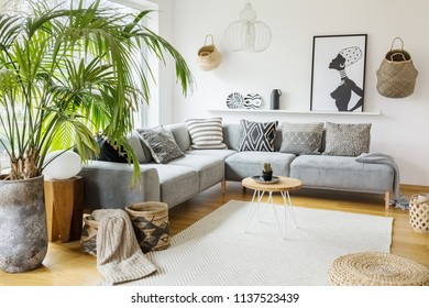 Plant next to grey corner sofa in african living room interior with poster and pouf. Real photo