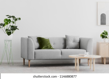 Plant next to grey couch in white living room interior with wooden table and poster. Real photo
