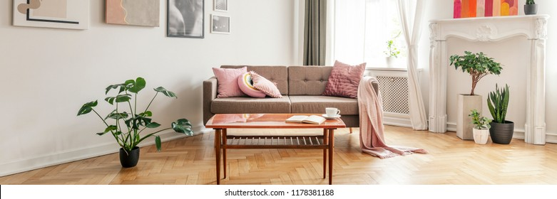 Plant next to wooden table and sofa with pillows and blanket in living room interior. Real photo