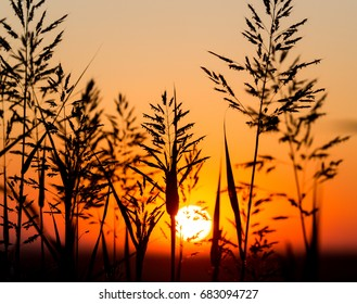 Plant on the background of a golden sunset