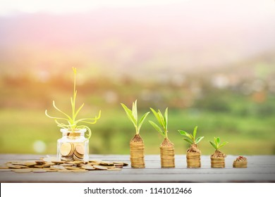 Plant on coins,growing money,finance and investment concept