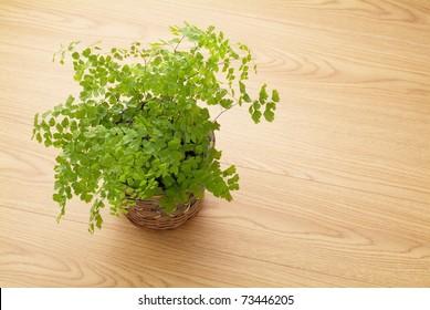 plant on the floor