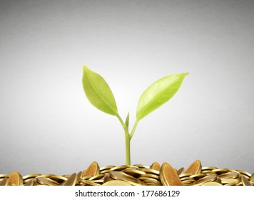 plant on gold coins and the graph them
