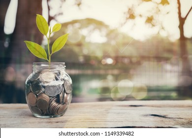 Plant on pile coins in the bottle and graph financial, Money growing concept and the goal success.