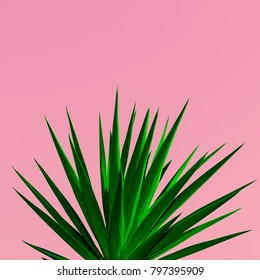 Plant on pink. Plant lovers. minimal concept