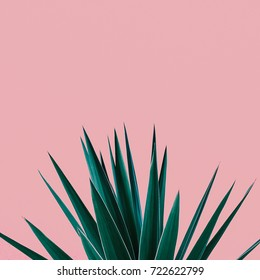Plant on pink.  Tropical Greens  minimal art design