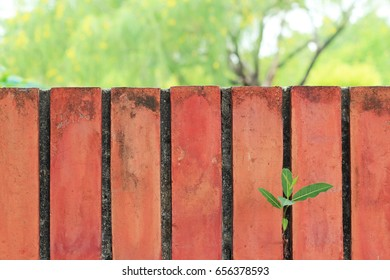 plant on red brick wall texture grunge background