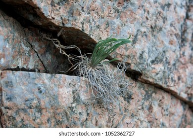 Plant on the rock