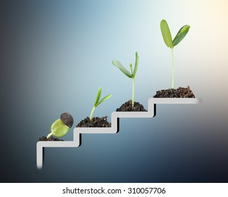 Plant on staircase , growth , development concept