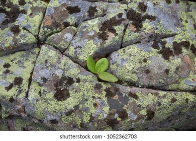 Plant on the stones