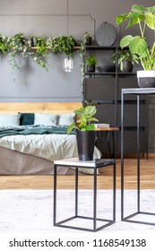 Plant on table in grey bedroom interior with green blanket on bed with wooden bedhead. Real photo