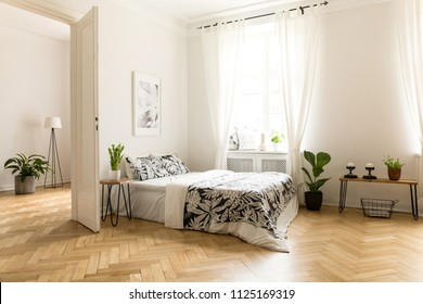 Plant on table next to bed in white open space interior with window and poster. Real photo
