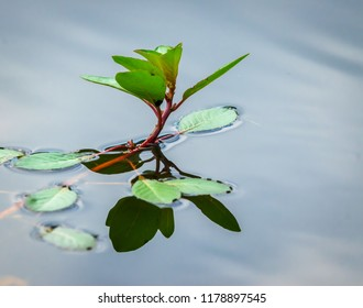 Plant on water with reflection nature photography