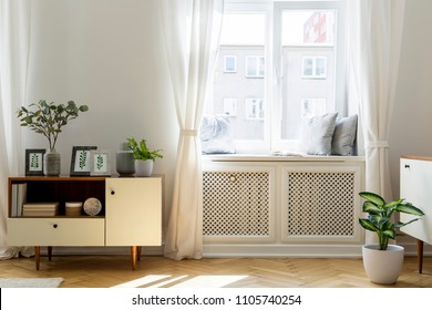 Plant on wooden cupboard in white living room interior with window. Real photo