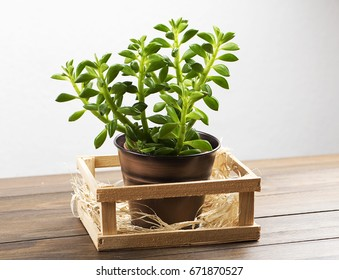 Plant on wooden table. Decor. - Shutterstock ID 671870527