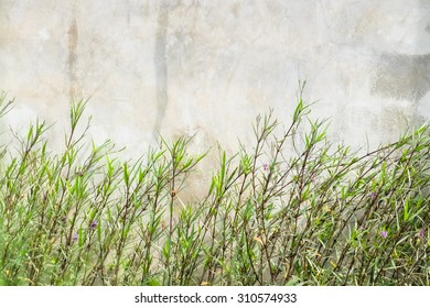 Plant outside the concrete wall
