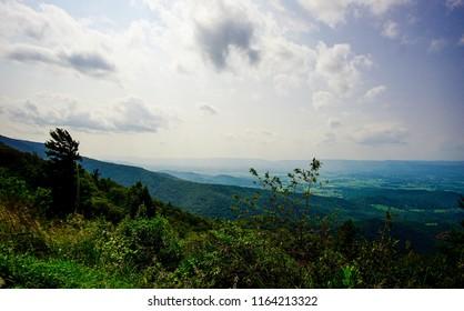 plant overlooking shenandoah valley